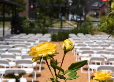 Yellow Rose Ceremony